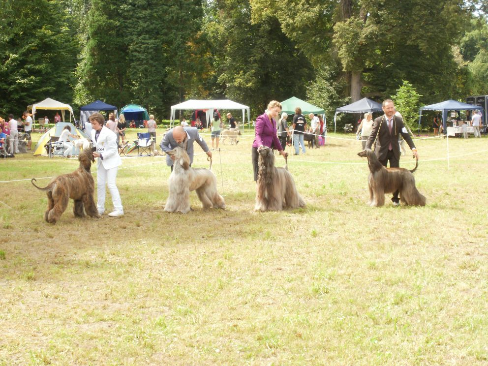 Euro sighthound show-grafenegg (a)