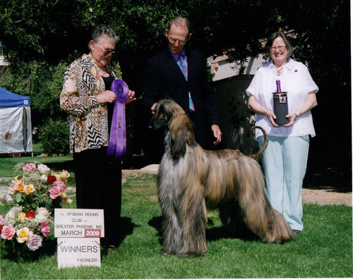afghan hound club of greater phoenix (usa)